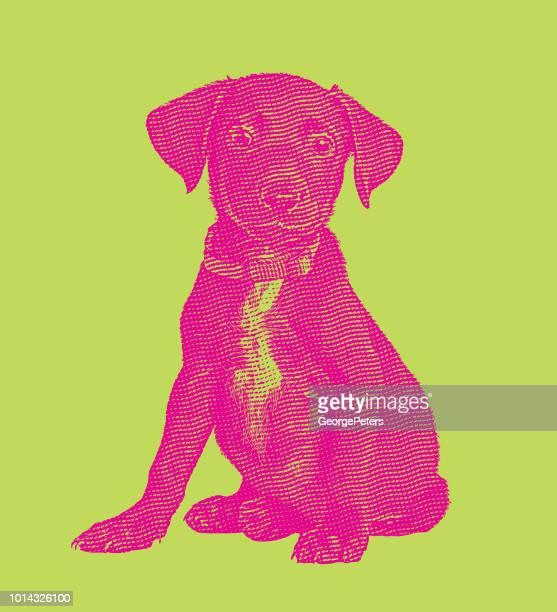 Labrador Retriever Welpe Hund in ein Tierheim, in der Hoffnung, angenommen werden