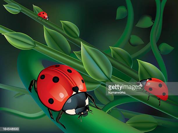 illustrations, cliparts, dessins animés et icônes de lady bird à feuilles - coccinelle