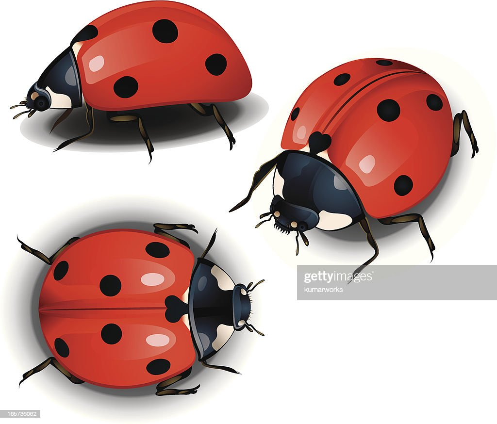 Lady Bird : stock illustration