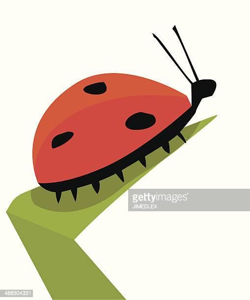 Lady bug sitting on a leaf with spots