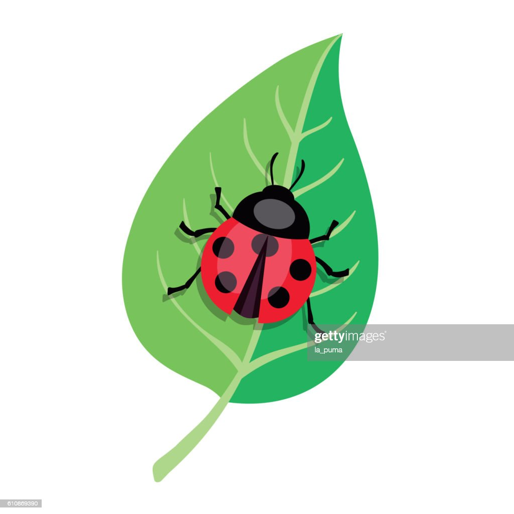 Ladybug crawling on a green leaf. Color vector illustration