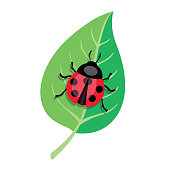 Ladybug crawling on a green leaf. Color vector illustration