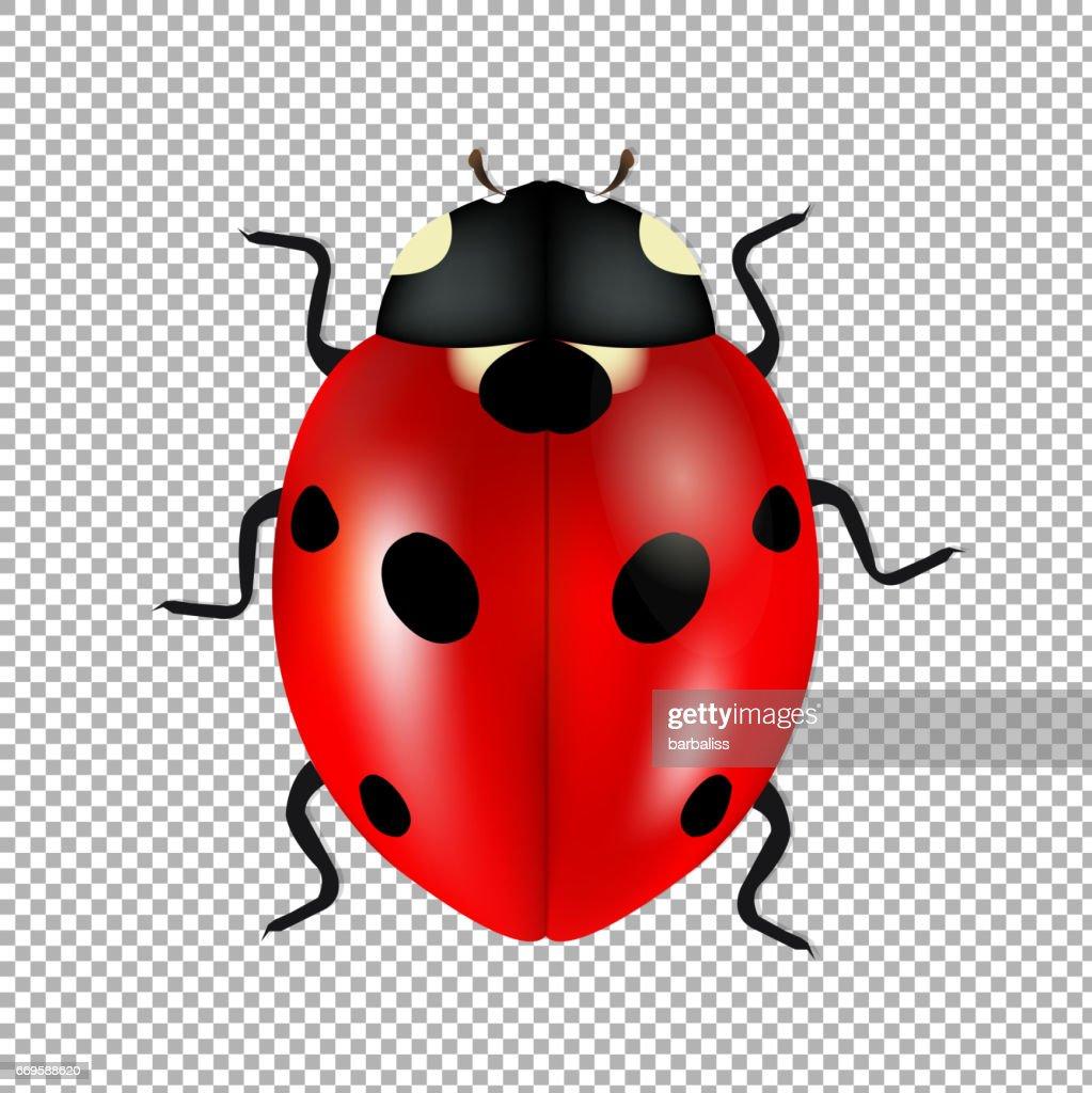 Ladybug Isolated In Trasparent Background