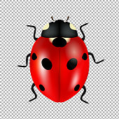 Ladybug Isolated In Trasparent Background