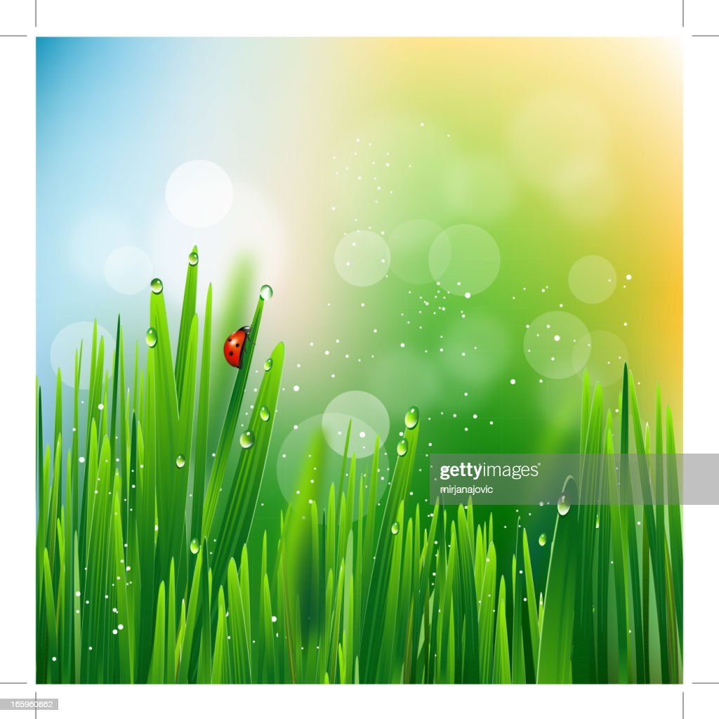 Ladybug on green grass : stock illustration