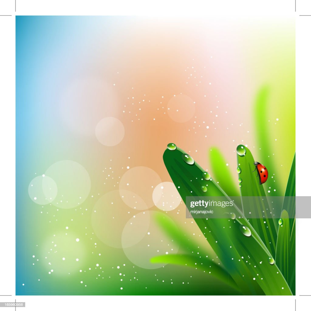 Ladybug on green grass : Stock Illustration