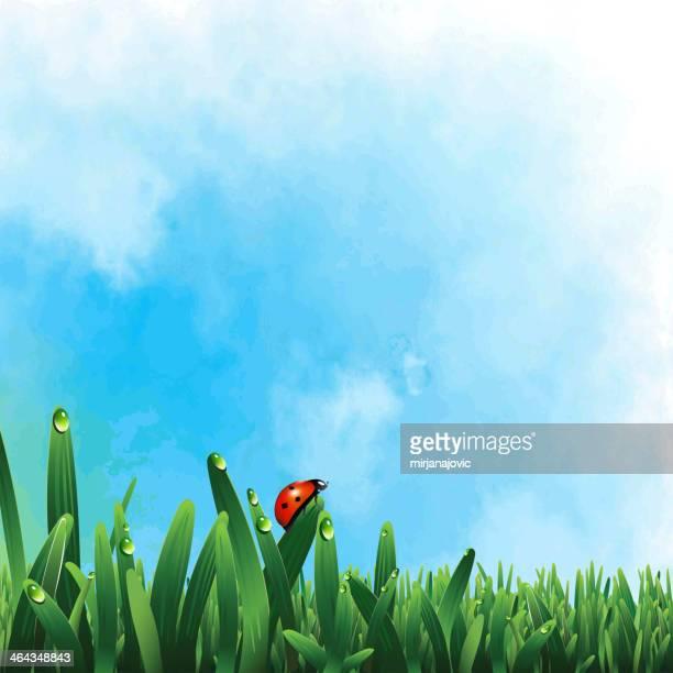 illustrations, cliparts, dessins animés et icônes de coccinelle sur gazon vert - coccinelle