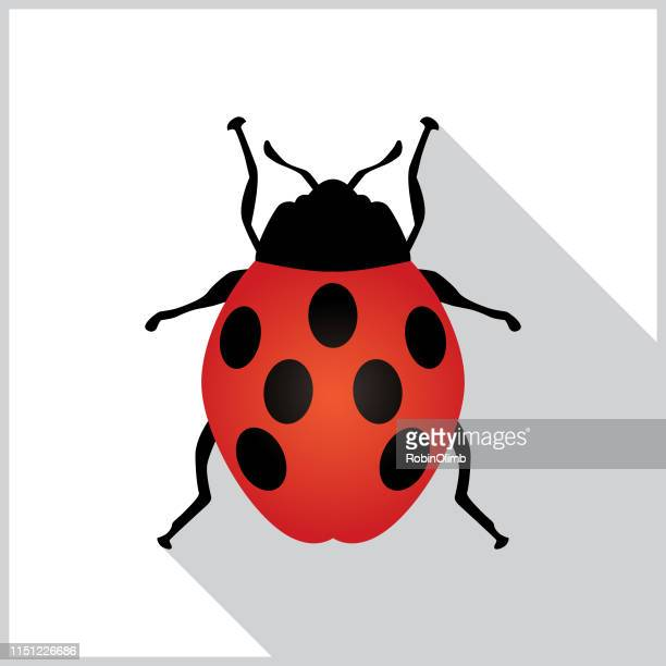illustrations, cliparts, dessins animés et icônes de icône coccinelle shadow - coccinelle