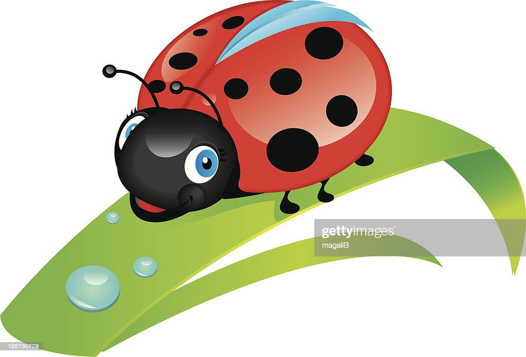 ladybug : stock illustration