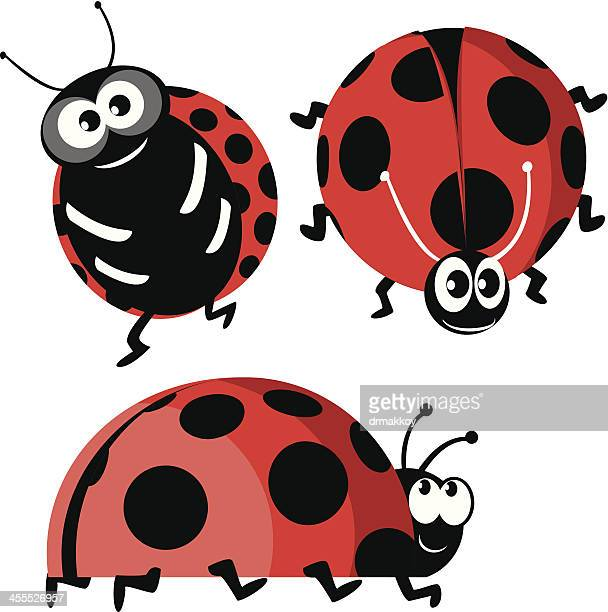 illustrations, cliparts, dessins animés et icônes de coccinelle - coccinelle