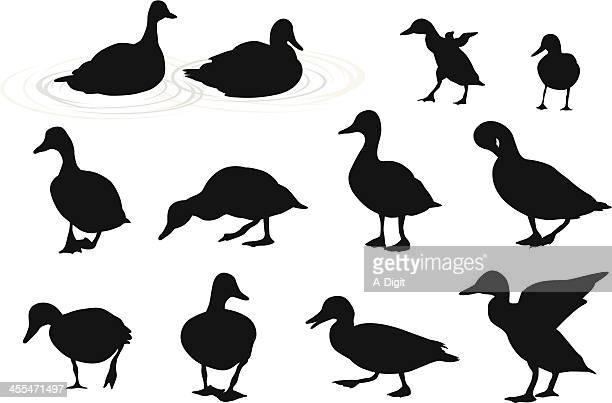 bildbanksillustrationer, clip art samt tecknat material och ikoner med lake ducks vector silhouette - duck