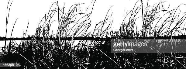 lake reeds silhouette - marsh stock illustrations