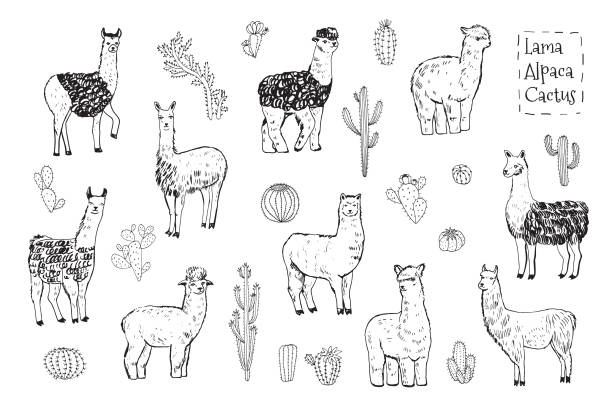 Free llama Images, Pictures, and Royalty-Free Stock Photos