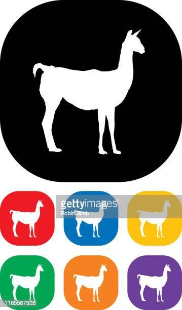 ilustraciones, imágenes clip art, dibujos animados e iconos de stock de conjunto de iconos de lama - peru