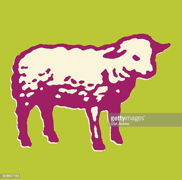 lamb - sheep stock illustrations, clip art, cartoons, & icons