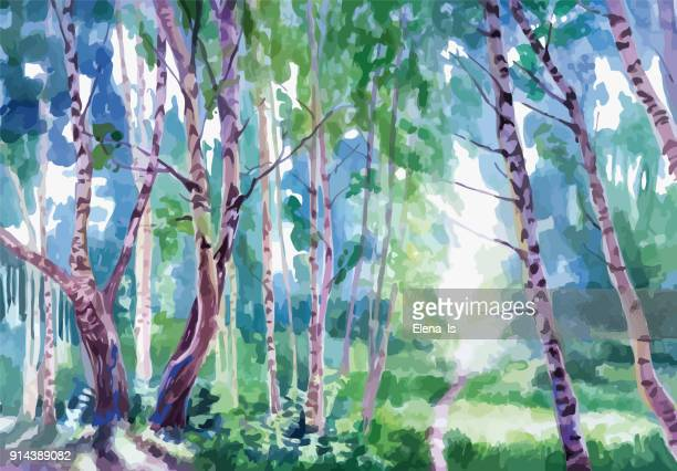 landscape forest with birches