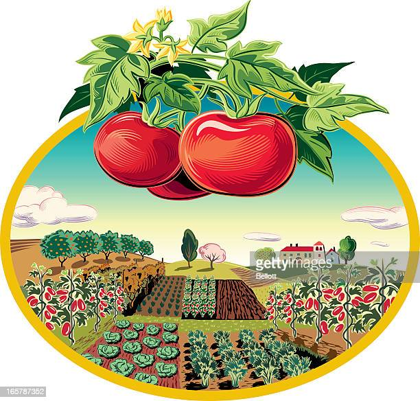 landscape in oval frame and tomatoes - savoy cabbage stock illustrations, clip art, cartoons, & icons