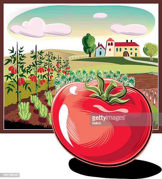 landscape in the square frame and tomatoes - endive stock illustrations, clip art, cartoons, & icons