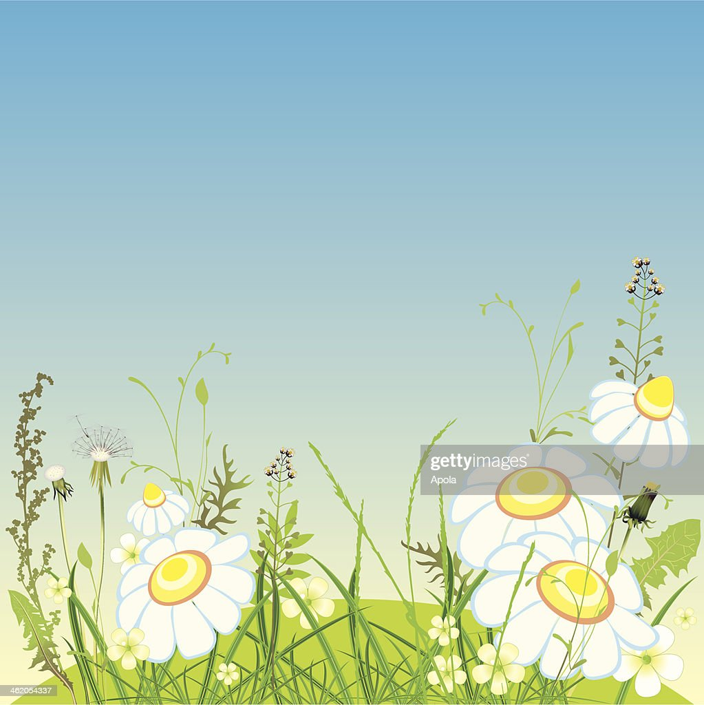 landscape, meadow flowers and grass, vector illustration