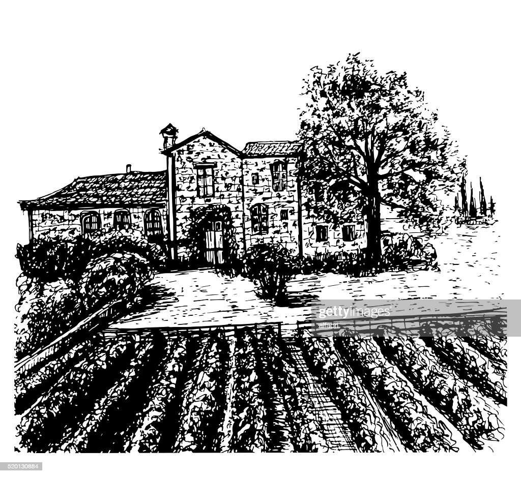 landscape vineyards hand drawn ink sketch vector illustration