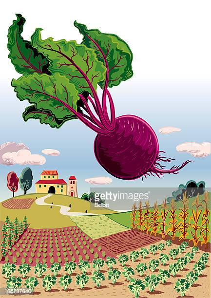 landscape with beetroot - common beet stock illustrations, clip art, cartoons, & icons