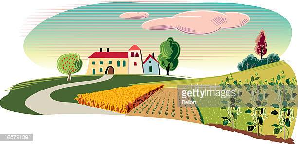 landscape with farm - broad bean stock illustrations, clip art, cartoons, & icons