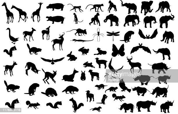 large animal silhouette collection - mammal stock illustrations