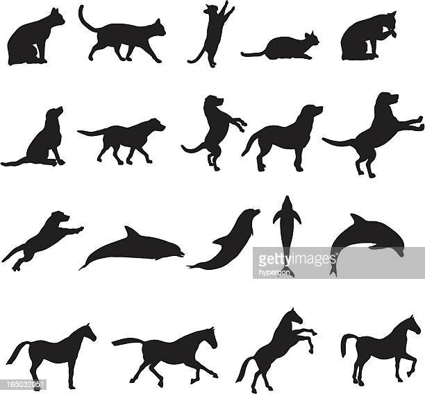 large animal silhouette collection - undomesticated cat stock illustrations