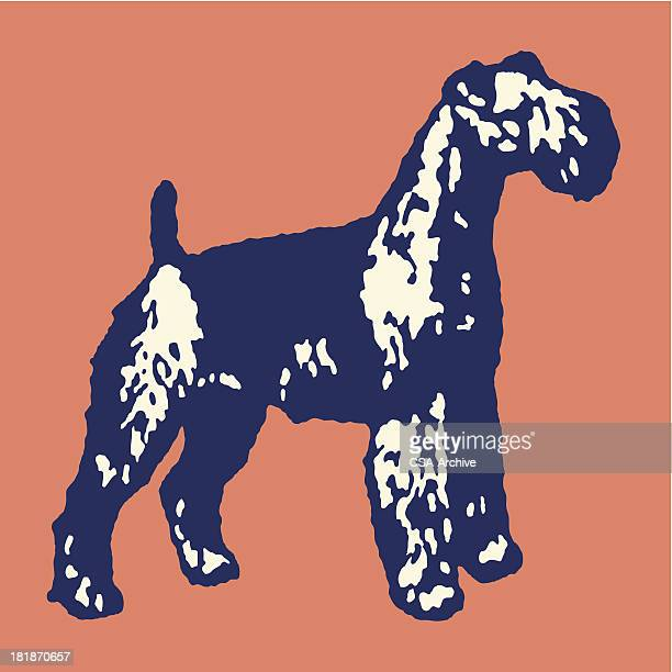 large dog - best in show stock illustrations