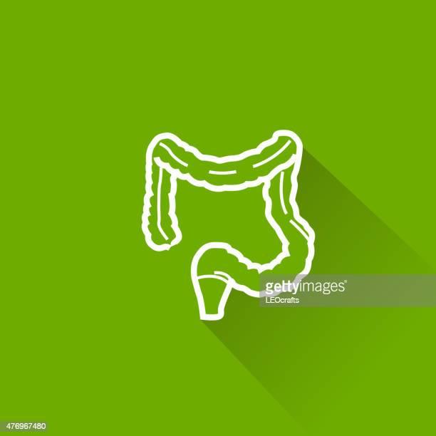 ilustraciones, imágenes clip art, dibujos animados e iconos de stock de icono del intestino grueso - intestino grueso humano