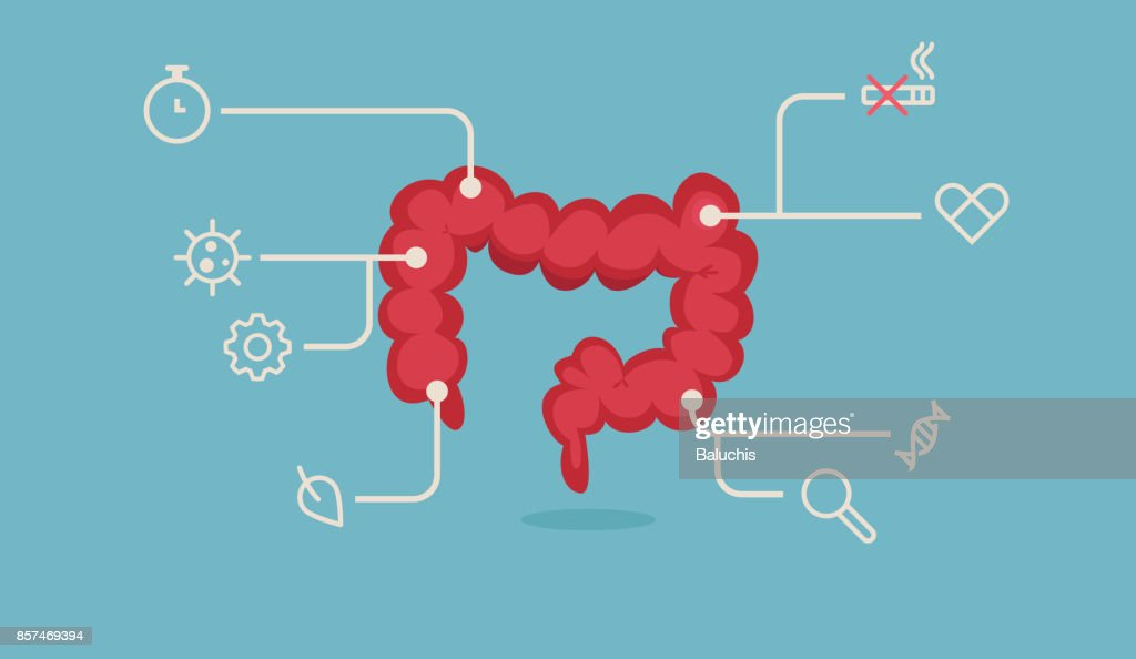 Large intestine vector illustration