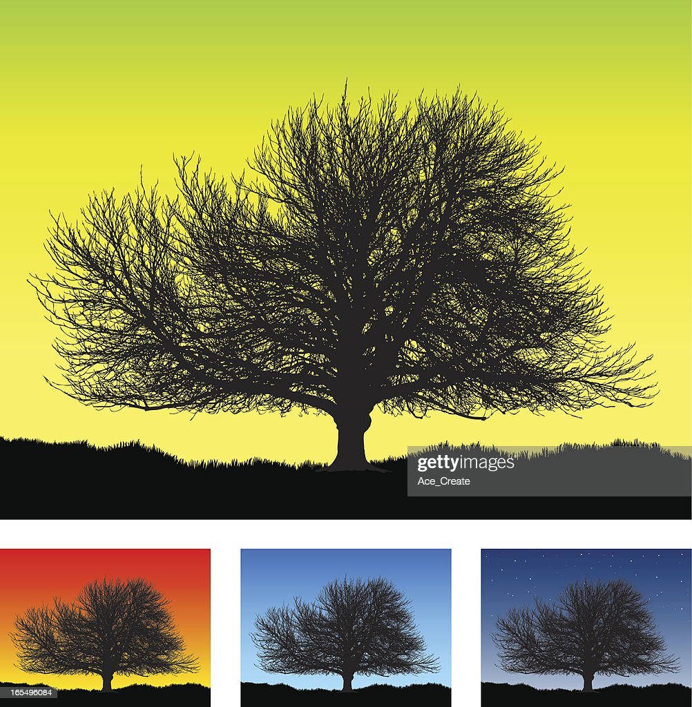 Large old detailed tree silhouette : Stock Illustration