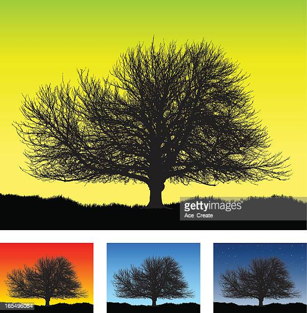 Large old detailed tree silhouette