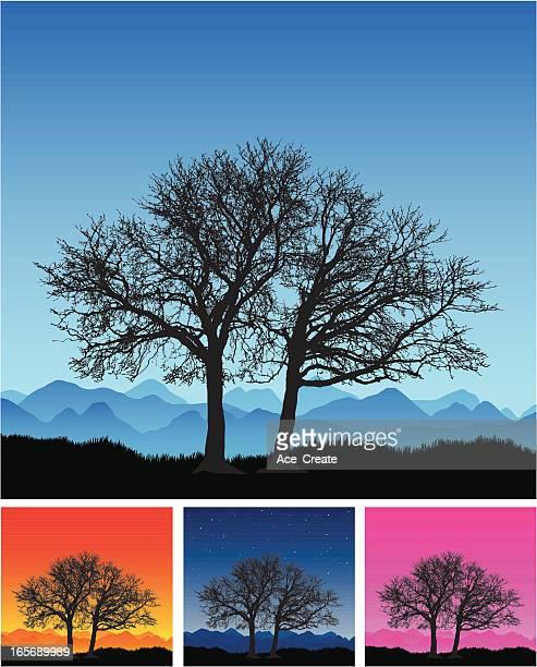 Large remote beautiful winter tree silhouette