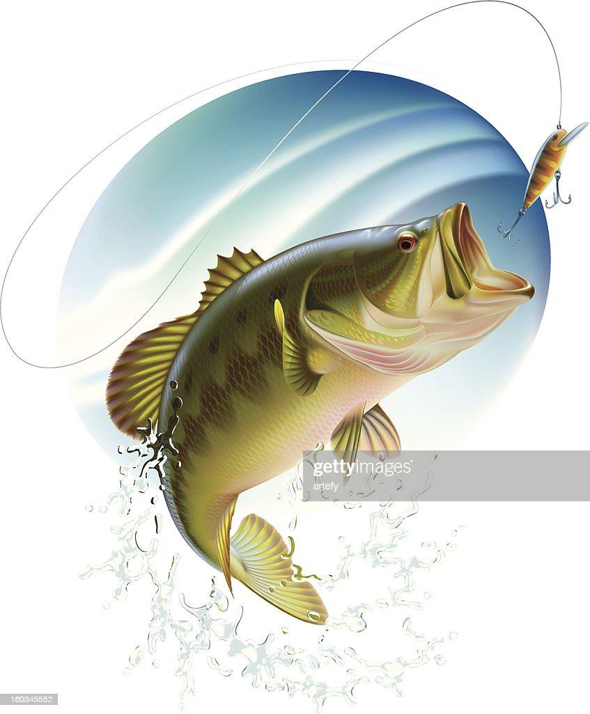 Largemouth bass catching a bait