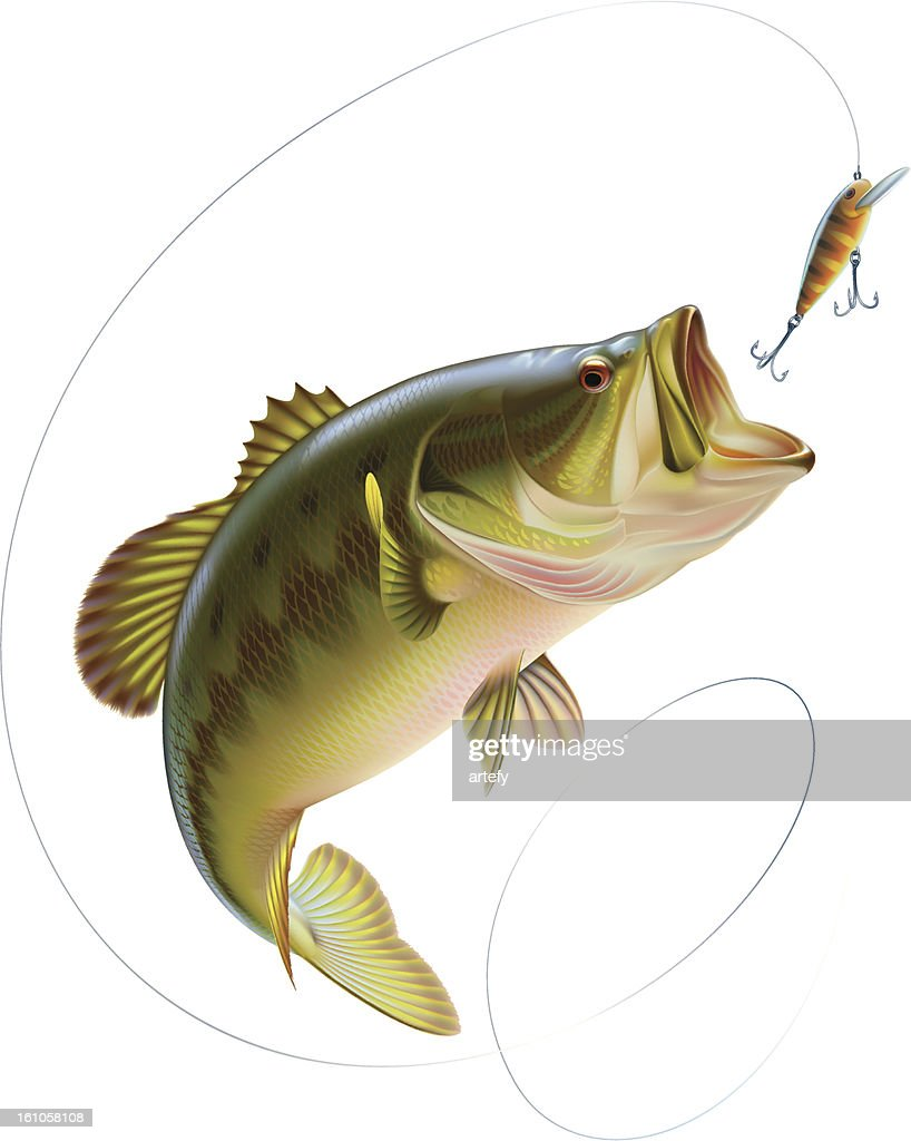 Largemouth bass catching a bait