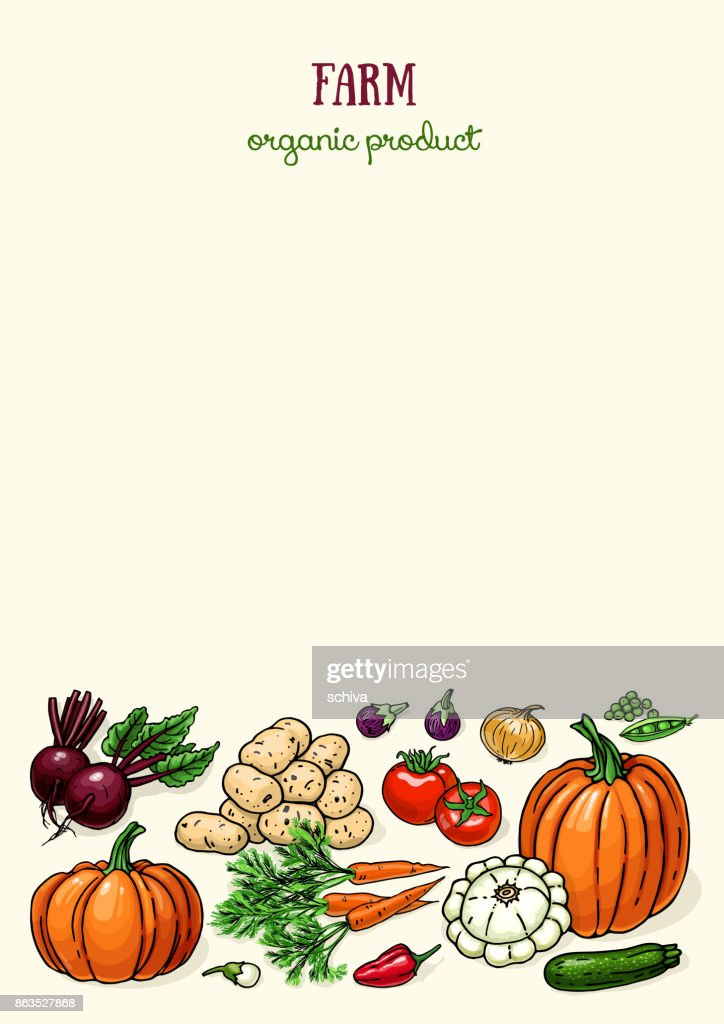 Layout design with farm vegetables. Vector color food sketchy background
