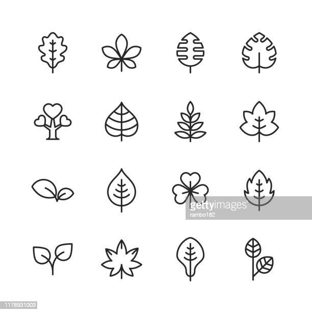 leaf and plant line icons. editable stroke. pixel perfect. for mobile and web. contains such icons as leaf, plant, nature, environment, ecology, oak, palm, maple, pine. - {{ collectponotification.cta }} stock illustrations