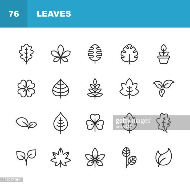 leaf and plant line icons. editable stroke. pixel perfect. for mobile and web. contains such icons as leaf, plant, nature, environment, ecology, oak, palm, maple, pine. - oak leaf stock illustrations