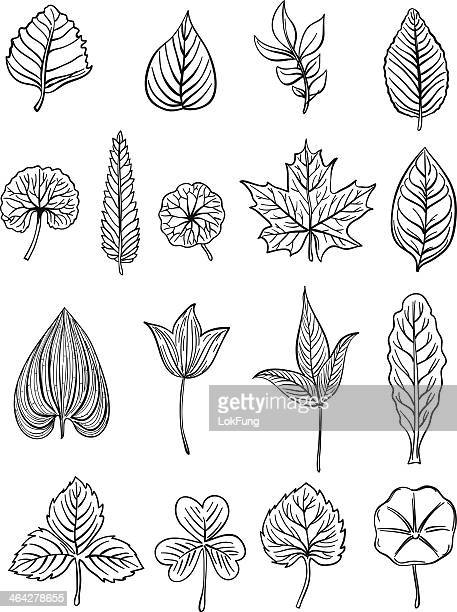 leaf collection in black and white - illustration - maple leaf stock illustrations
