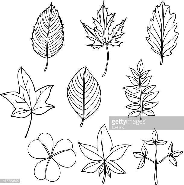 ilustrações, clipart, desenhos animados e ícones de coleção de folha em preto e branco - spire