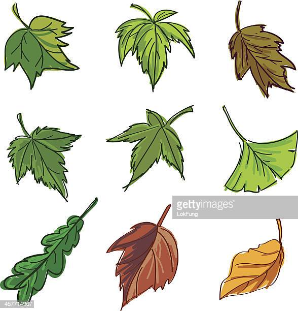 Leaf collection in colour
