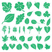 Leaf Foliage Green Ecology Nature Set
