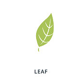 Leaf icon. Flat style icon design. UI. Illustration of leaf icon. Pictogram isolated on white. Ready to use in web design, apps, software, print.