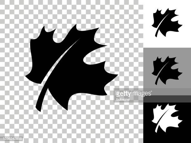 leaf icon on checkerboard transparent background - maple leaf stock illustrations