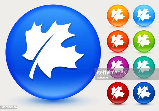 leaf icon on shiny color circle buttons - maple leaf stock illustrations