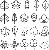Leaf icon set. Linear vector illustration isolate on white background. Natural autumn plants. Pictures for icon design