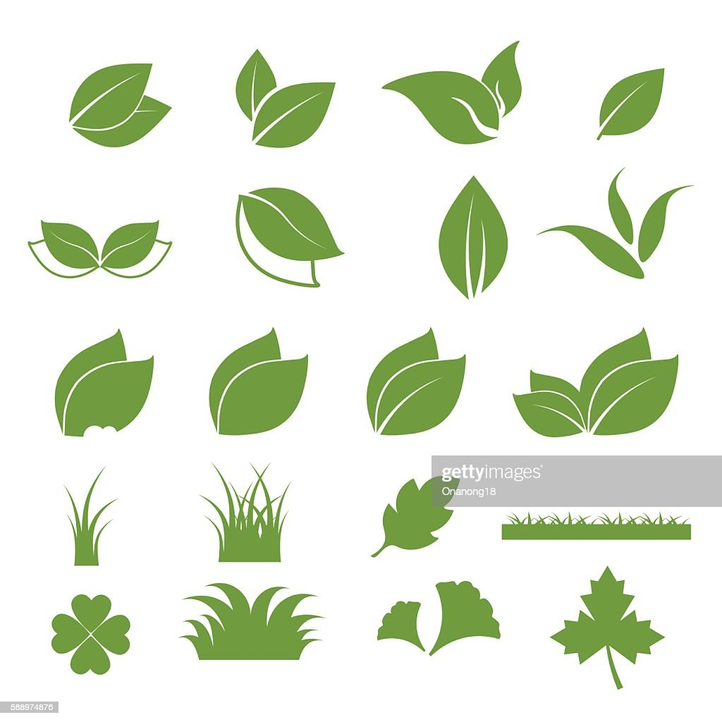 leaf icon with white background.