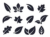 Leaf Icons and Symbols