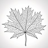 Leaf of a maple, nature symbol, monochrome vector.